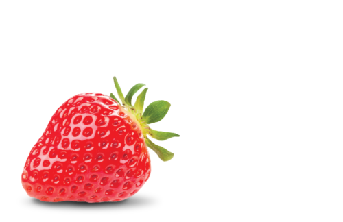 Pampered Palate Cafe Logo